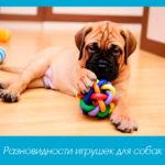 Разновидности игрушек для собак
