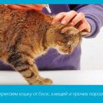 Оберегаем кошку от блох, клещей и прочих паразитов
